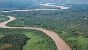 Quel pourcentage du territoire de la Guyane française est couvert par la forêt tropicale ?