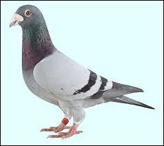 Un des membre du groupe a pour habitude de prénommer tous les pigeons qu'il voit   Kevin . Qui est-ce ?
