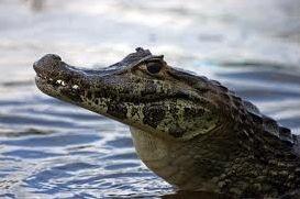 Les reptiles et autres batraciens
