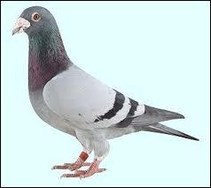 Dans  Vidéo diary   Liam a dit qu'il souhaitait faire disparaître le pigeon de Louis
