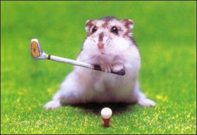 Il ne ressemble pas à un hamster, dans son domaine, il serait plutôt un fauve !