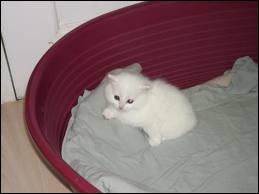 De quelle couleur est le chat ?