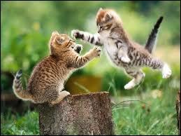 Que font les chats ?