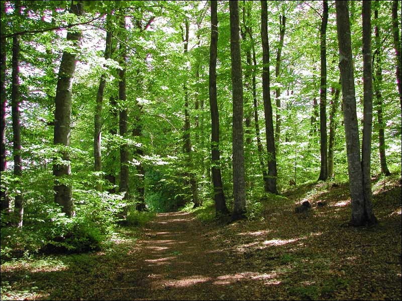 Comment s'appellent les deux fugitives qui essayent d'atteindre le district 13 et que Katniss croise dans la forêt ?