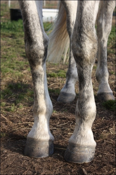 Je dois m'inquiéter si mon cheval a :