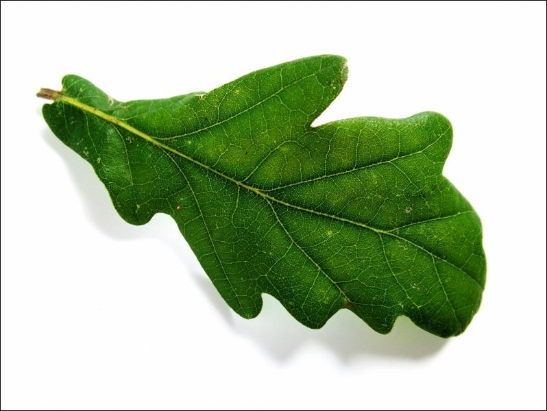 Les feuilles d arbres