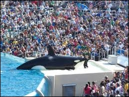 Comment se nomme l'orque qui est la mascotte du Sea World de San Diego ?