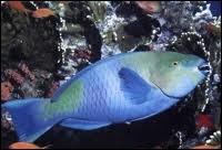 Quel poisson des mers tropicales est aussi appelé poisson-perroquet ?