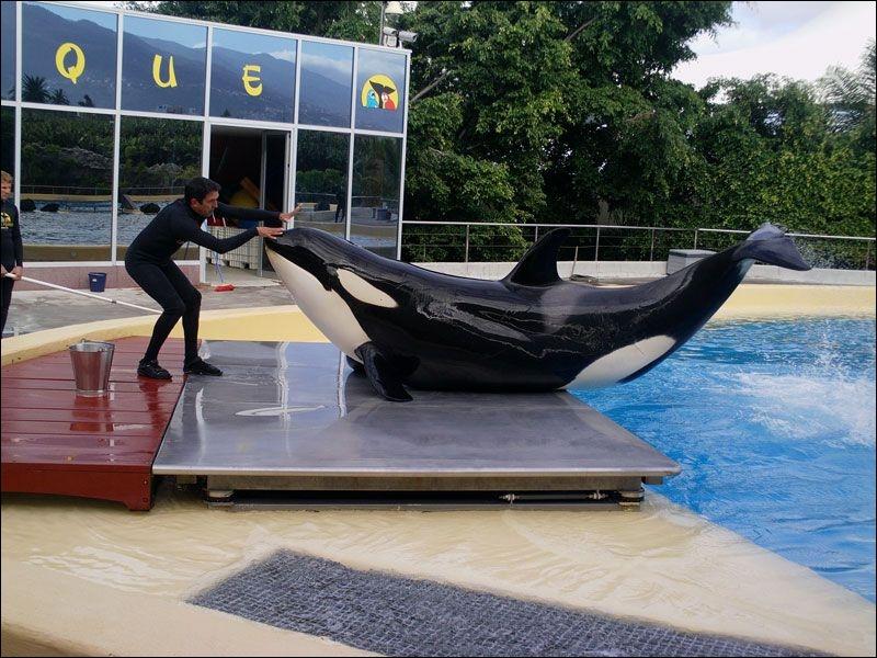 Quelle est cette orque ?