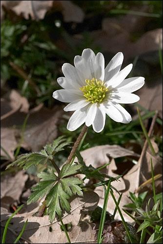 Connaissez-vous cette fleur ?