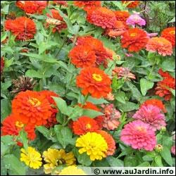 Comment se nomment ces fleurs ?