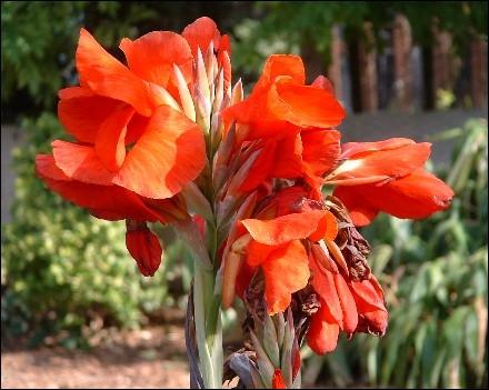 Reconnaissez-vous cette fleur ?