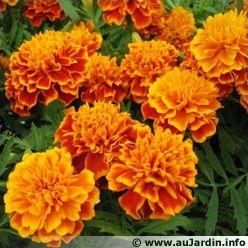 Les fleurs de nos jardins (3)