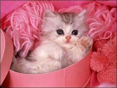J'aime le rose, les chats, je suis particulièrement méchante et j'ai un prénom qui me va bien, je suis...