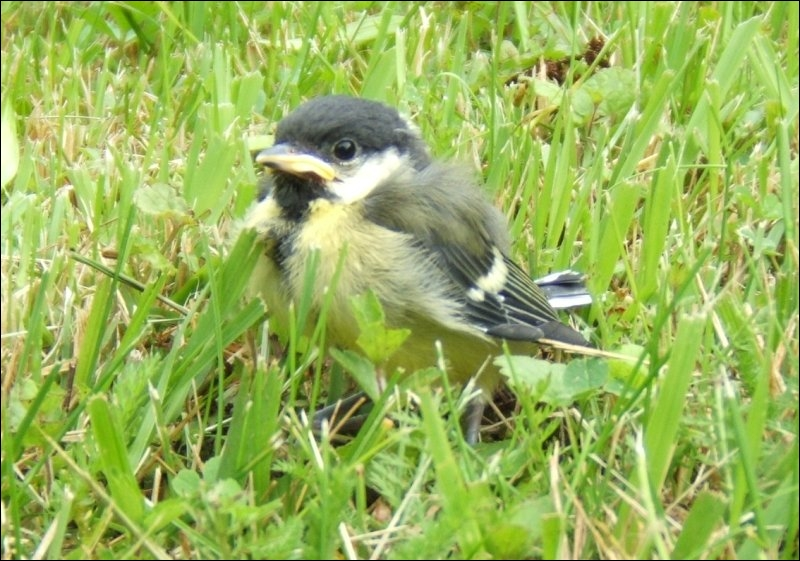 Et voici un bébé oiseau :