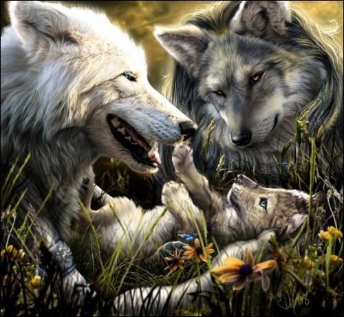 Tendre image de ce couple de loups et leur petit ...