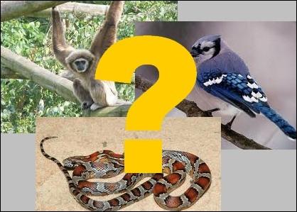 Qu'est-ce qu'un gibbon ?