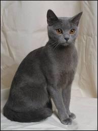 Quelle romancière a relaté la passion d'un jeune homme pour sa chatte dans le roman  La chatte  ?