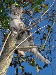 Quel écrivain est l'auteur des  Contes du chat perché  ?