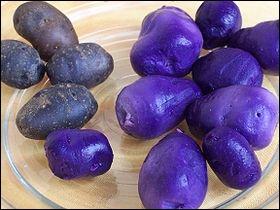 La vitelotte est une pomme de terre bleu-violet profond, désormais assez connue. Est-elle une variété nouvellement créée ou ancienne ?