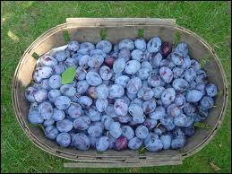 Ces beaux fruits bleutés permettent de réaliser ce qui est sans doute l'une des meilleures tartes au monde. Ce sont des quetsches qu'on appelle aussi... ?