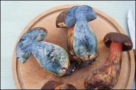 Encore un joli champignon comestible à la chair bleue, qu'on appelle bolet... ?