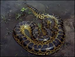 L'anaconda est-il venimeux ?