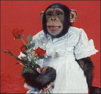 Le reconnaissez-vous ? C'est le chimpanzé !