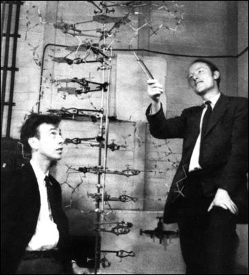 Le 25 avril 1953, James Dewey Watson, Maurice Wilkins et Francis Crick font une découverte qui va révolutionner le monde de la génétique. Cette découverte leur vaudra un Prix Nobel en 1962.