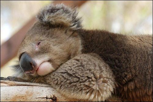 Vous n'avez sûrement pas oublié cette chanson : Sweet dreams !