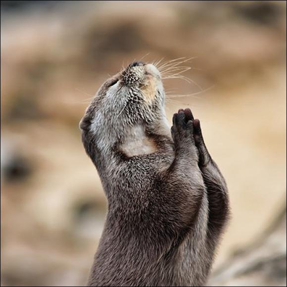 Il a chanté : C'est ma prière !
