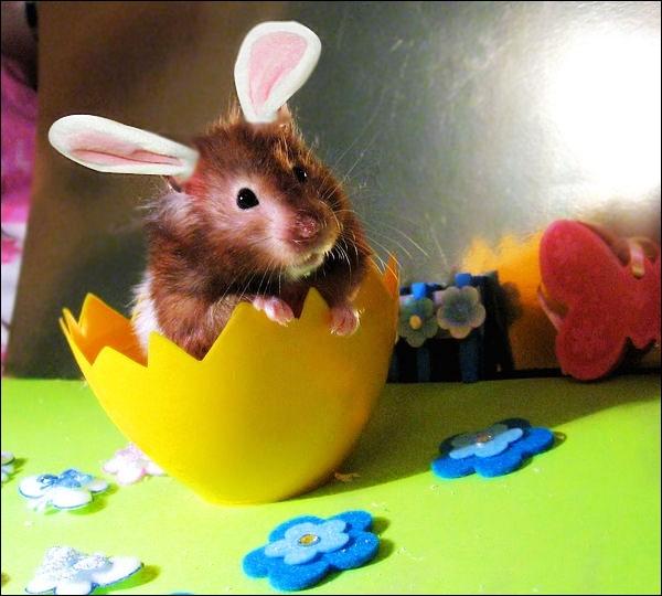 Souvenez-vous : Ce matin un lapin a tué un chasseur !