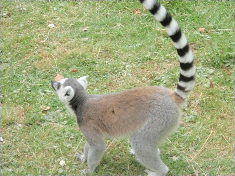 Cet animal vit à Madagascar !