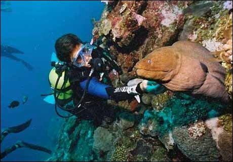 Ce plongeur caresse un congre !
