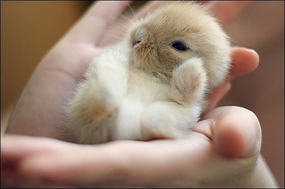 Cet animal est un lapin !