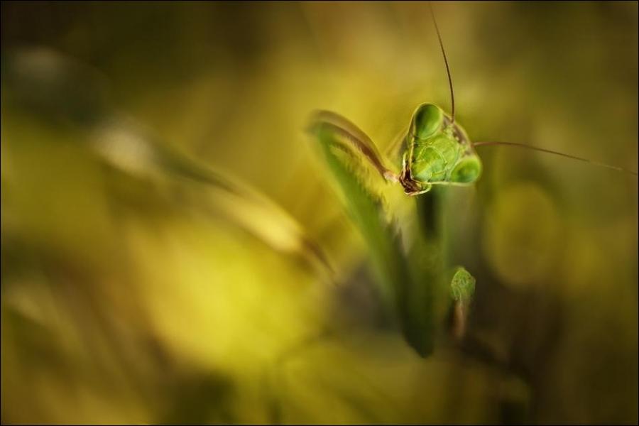 Admirez cette magnifique sauterelle verte !