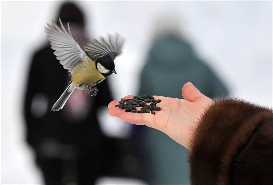 Cet oiseau est une mésange !