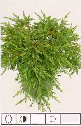 À quelle catégorie appartient cette plante ?