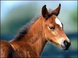 L'espérance de vie d'un cheval est de ...