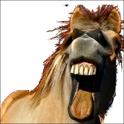 Un cheval adulte mâle a ... dents .