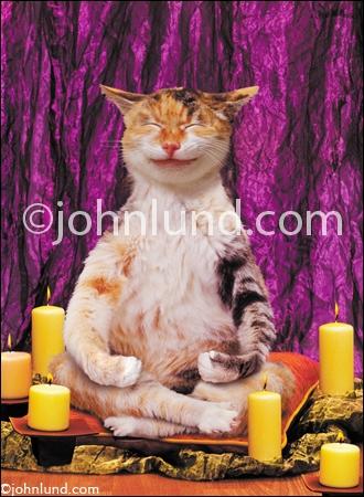 Comment appelle-ton cette posture de la zen attitude ?
