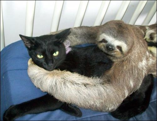 Ce chat vient de se faire un nouvel ami !