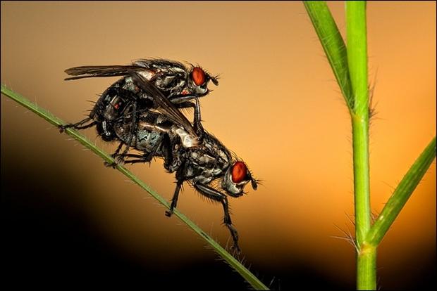Dans ce film de David Cronenberg,  La mouche , cet acteur prend l'apparence de cet insecte !