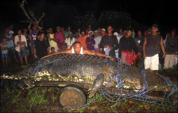 D'après vous, où fut capturé ce crocodile marin ?