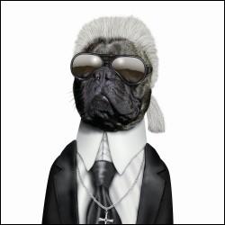 Une véritable gravure de mode, en qui ce chien est-il déguisé ?