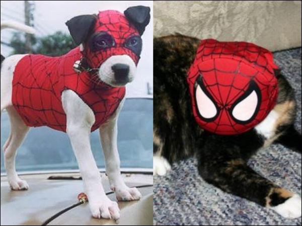 Avec ce chien, vous pouvez aller vous faire une toile !