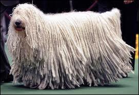 Ce chien est utile pour les bergers, il n'est pas difficile à différencier des autres races de chiens grâce à son poil, quelle est cette race ?