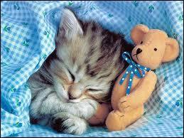 En moyenne, combien de temps par jour dort un félin ?