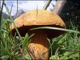 Comment classerez-vous ce champignon ?