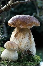 Que ferez-vous de ce champignon ?